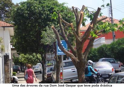 Araxá tem área verde abaixo do recomendado pela ONU