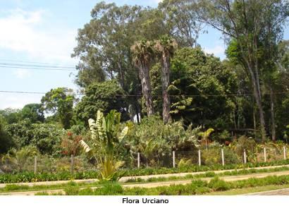 Semana Florestal destaca educação ambiental