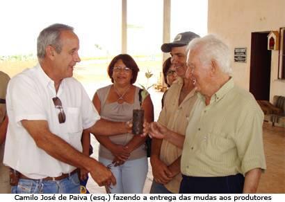 Produtores rurais recebem mais 300 mil mudas de eucalipto
