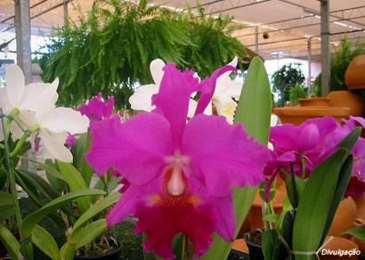 FCCB anuncia Mostra de Orquídeas em comemoração ao Dia Internacional da Mulher