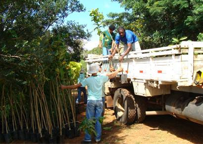 Cemig doa 500 mudas de árvores para a prefeitura