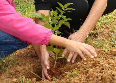 Caic recebe 200 mudas de árvores do Projeto Verde Vida