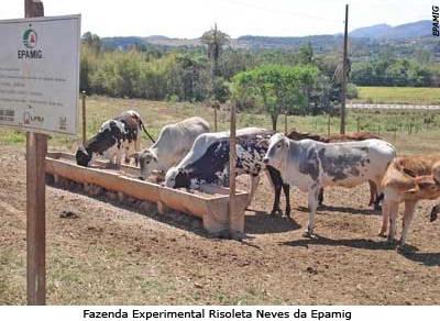 Epamig aprova duas áreas para implantar fazenda experimental em Araxá