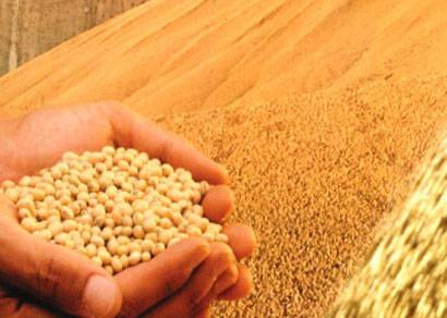Safra  de grãos deve cair 8,7% este ano, segundo o IBGE