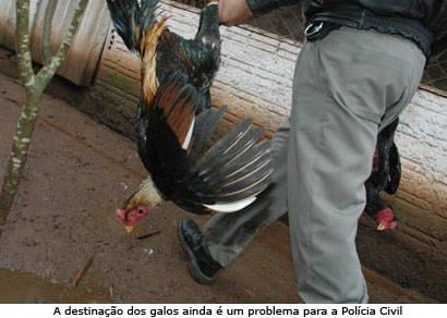 PM de Meio Ambiente de Araxá desmantela maior rinha da região