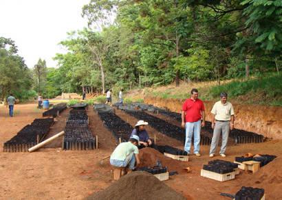 Prefeitura inicia distribuição de 19 mil mudas de maracujá em janeiro