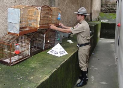 Comerciante que mantinha pássaros silvestres em cativeiro é preso