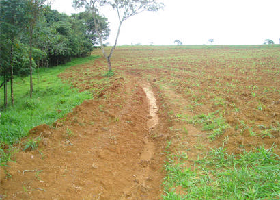 Exploração ilegal de florestas em Araxá e Perdizes é combatida pela PM