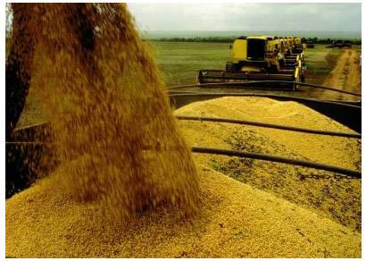 Exportações de soja em Minas crescem 84%