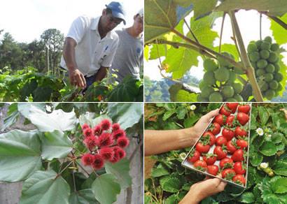 Epamig inaugura fazenda experimental de Araxá nesta quarta