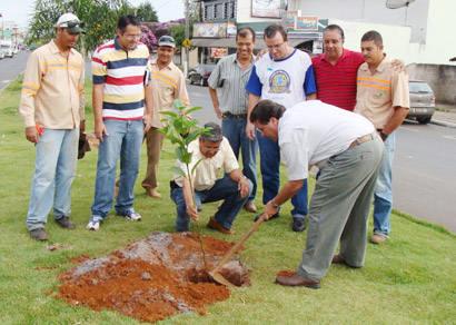 Projeto de Arborização plantará 5,5 mil árvores