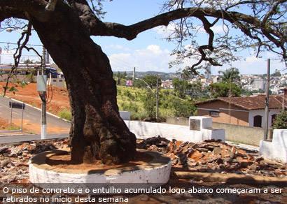 Árvore dos Enforcados recebe tratamento para ter vitalidade aumentada