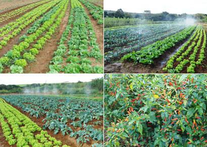 Projeto Cinturão Verde é ampliado para atender a demanda dos comerciantes