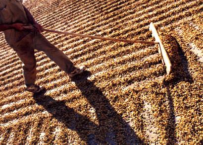 Vereadores aprovam projeto do Executivo para a construção de terreiros de café