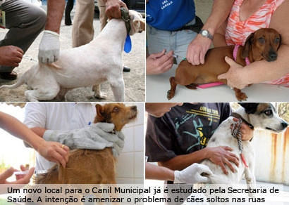 Começa a vacinação de cães e gatos em Araxá