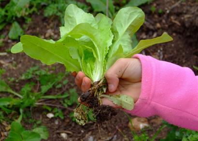 Cultivando Saúde incentiva a importância do alimento saudável