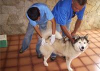 Vacinação contra raiva é interrompida em Minas