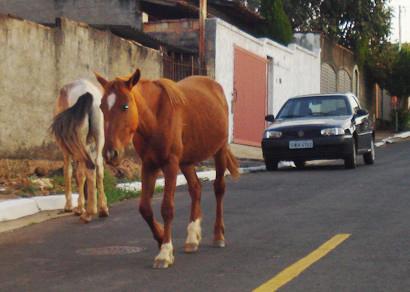 Recolhimento de animais soltos em vias públicas começa na próxima terça