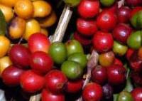 Agronegócio de Minas bate recordes com exportação