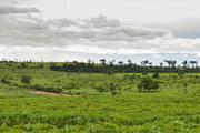 Minas já aplicou R$ 57,1 milhões em agricultura de baixo carbono