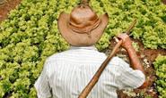 Seapa lança o Plano de Desenvolvimento da Agricultura Familiar