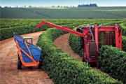 Exportação do agronegócio em Minas aumenta 34,36%