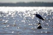 Brasil detém 12% da água do planeta, mas recurso está mal distribuído