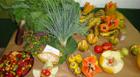 Inscrições abertas para o curso de reaproveitamento de alimentos