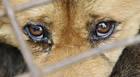 Polícia Militar do Meio Ambiente registra maus tratos a animais