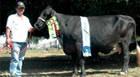 ExpoAraxá 2013 aguarda mais de 1 mil animais para competições e leilões