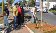 Avenida Imbiara recebe mais árvores