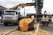 Prefeitura dá início à revitalização da avenida Senador Montandon