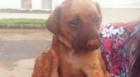Cachorro é resgatado depois de ser enterrado vivo em Araxá