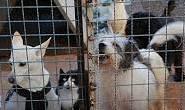 Morador registra perturbação de cães e reclama da vizinha