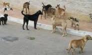 Mulher acusa vizinha de maltratar cães recolhidos na rua