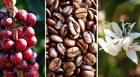 Araxá sedia o principal evento de pesquisa da cafeicultura do Brasil