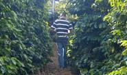 Minas atrai indústria de café para agregar valor ao produto
