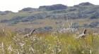 Curta a Canastra: São Roque de Minas e Buracas