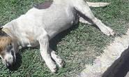 Homem mata cachorro com barra de ferro e foge