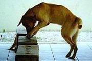 Cadela farejadora encontra drogas que estavam escondidas em lote