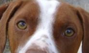 Cachorro ataca criança de 5 anos