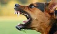 Bombeiros fazem captura de cachorro agressivo