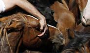 Cavalos são furtados do curral do Zoonoses