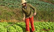 Consea destaca importância da agricultura familiar