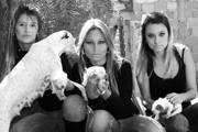Abrigo Mãos de Assis lança campanha de adoção de cães