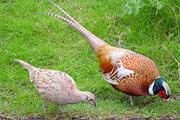 Bandido furta três pássaros enquanto mãe levava filho para a escola