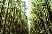Minas fortalece gestão de unidades de conservação e ações de fomento florestal