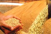 Recorde da safra mineira de grãos é confirmado