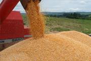 Minas Gerais bate recorde na produção de grãos