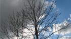 Inverno será marcado por temperaturas baixas e pouca chuva